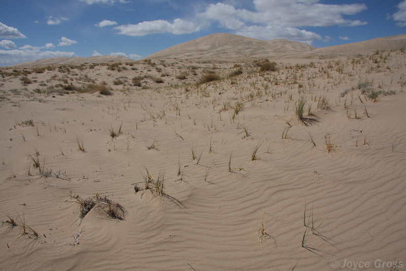 Kelso Dunes, Mojave National Preserve, California